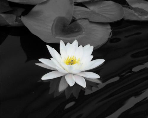 Pc astuces m ler noir et blanc et couleurs dans une photo - Noir et blanc couleur ...