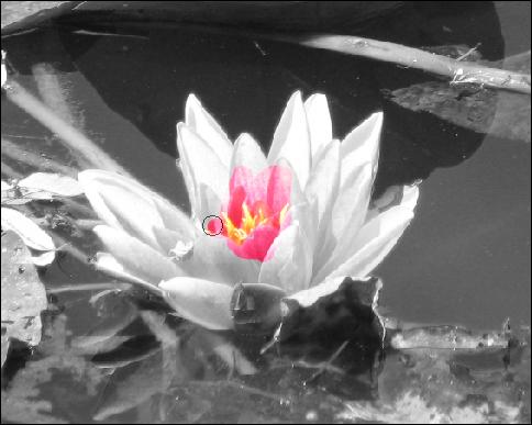 Pc astuces m ler couleur et noir blanc dans une photo - Noir et blanc couleur ...